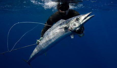 Spearfishing Tonga with Michael Takach