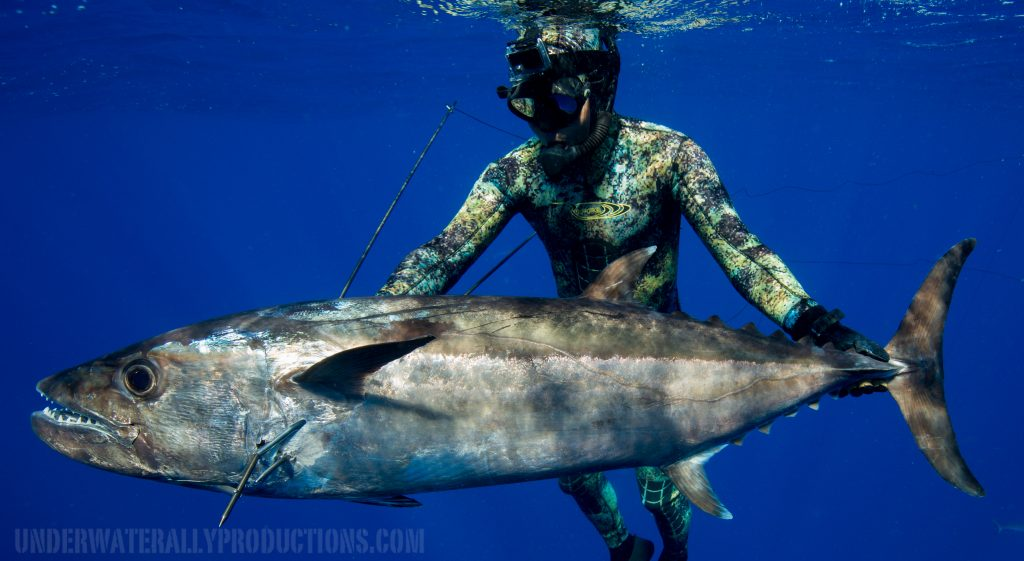 Spearfishing Tonga with Michael Takach