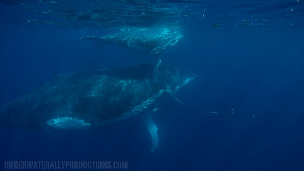 Whale Swims